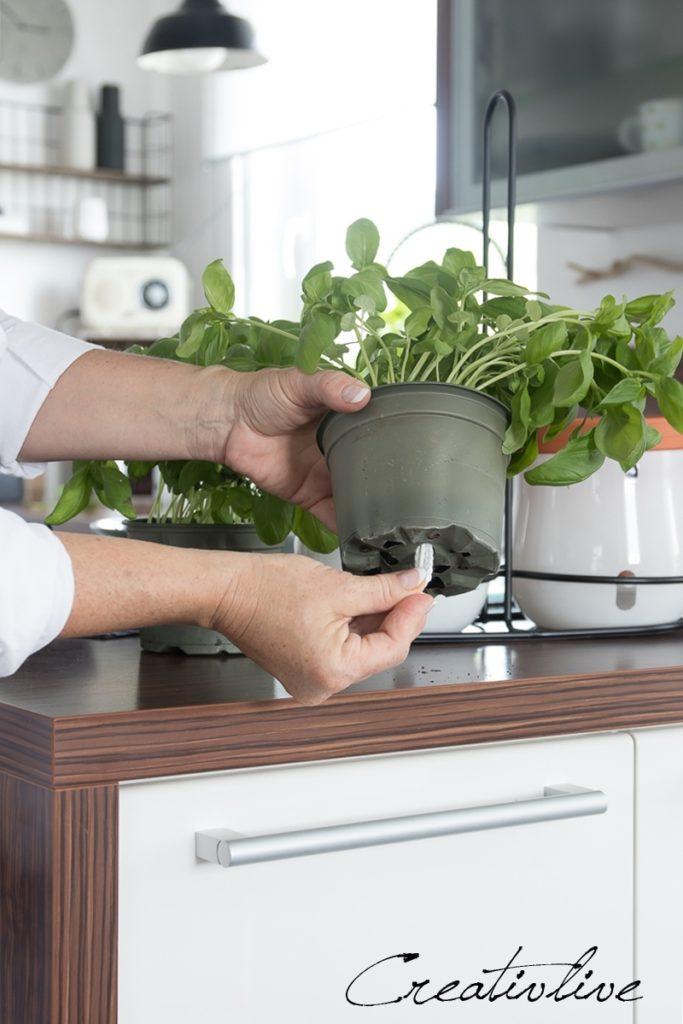 praktisches bew sserungssystem f r pflanzt pfe und low carb bruschetta creativlive. Black Bedroom Furniture Sets. Home Design Ideas